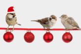 Schöne Weihnachten wünscht TIQ Solutions