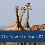 TIQs Favorite Four