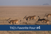 TIQ's Favorite Four  – Neuigkeiten im Bereich Data Analytics #4